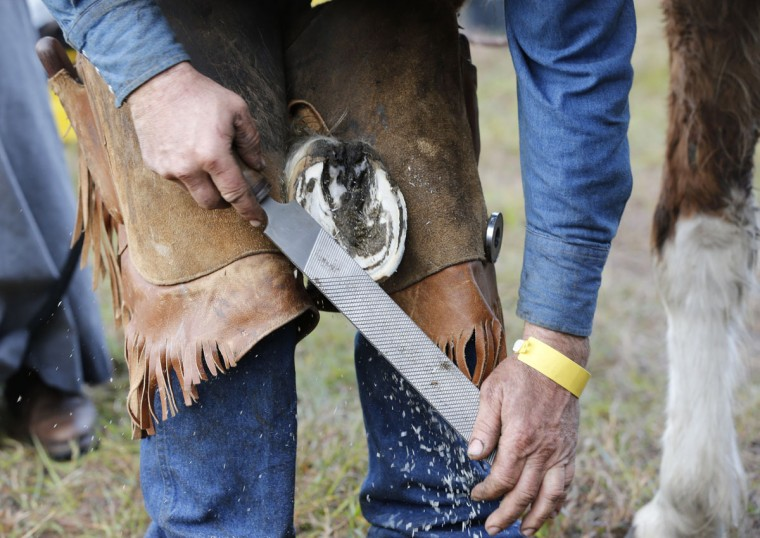 In this Tuesday, Jan. 26, 2016 photo, farrier Bryce Burnett of Zolfo Springs, Fla., files down the hoof of a horse named Rocky during the second day of the Great Florida Cattle Drive 2016, in Kenansville, Fla. Every couple of miles, riders stopped him and asked for help with their horses' feet. Rocky had an abscess in his hoof, and Burnett cut out the infection so that it would drain. (AP Photo/Wilfredo Lee)