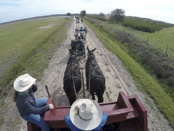 In this, Tuesday, Jan. 26, 2016 photo, farrier Bryce Burnett of Zolfo Springs, Fla., drives a mule powered wagon during the second day of the Great Florida Cattle Drive 2016, in Kenansville, Fla. (AP Photo/Wilfredo Lee)