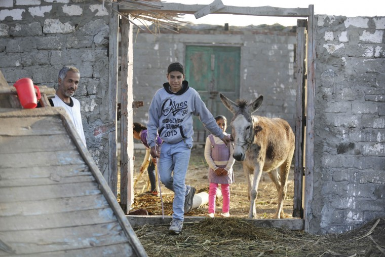 In this Friday, Feb. 5, 2016 picture, Ahmed Ayman, 14, leads his donkey to her daily training in the Nile Delta village of Al-Arid, about 150 kilometers north of Cairo, Egypt. She has leapt to fame in a small Egyptian village by defying her speciesí well-known stubbornness and jumping hurdles on command. (AP Photo/Amr Nabil)