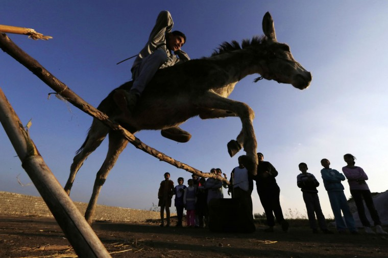 In this Friday, Feb. 5, 2016 picture, Ahmed Ayman, 14, rides his trained donkey as she jumps over a barrier in the Nile Delta village of Al-Arid about 150 kilometers north of Cairo, Egypt. (AP Photo/Amr Nabil)