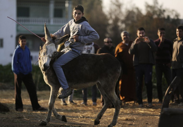 In this Friday, Feb. 5, 2016 picture, villagers gather to watch Ahmed Ayman, 14, and his donkey as they jump over a barrier in the Nile Delta village of Al-Arid about 150 kilometers north of Cairo, Egypt. The young farmer dreams of one day jumping horses, but he says he would never part with her, even for a huge sum of money, ìbecause she can jump, and I love her.î(AP Photo/Amr Nabil)
