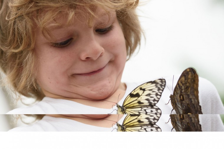 Adam, 6, poses for pictures with a Paper Kite butterfly (left) and a Pale Owl butterfly during a photocall at the Natural History Museum in central London, on March 23, 2016. (LEON NEAL/AFP/Getty Images)