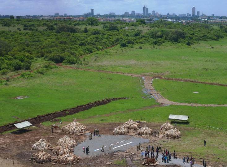 An aerial view shows continuing preparations around illegal stockpiles of ivory stacked up onto 10 individual pyres on April 27, 2016 in Nairobi's national park as they wait to be burned, in what is said to be the biggest stockpile destruction in history. Kenya on April 30, 2016 will burn approximately 105 tonnes of confiscated ivory, almost all of the country's total stockpile at an event attended by several African heads of state, conservation experts, high-profile philanthropists and celebrities which they hope will send a strong anti-poaching message. (TONY KARUMBA/AFP/Getty Images)