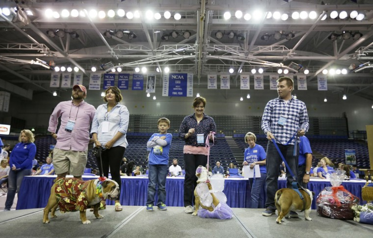 Finalists stand on stage during the 37th annual Drake Relays Beautiful Bulldog Contest, Sunday, April 24, 2016, in Des Moines, Iowa. The pageant kicks off the Drake Relays festivities at Drake University where a bulldog is the mascot. (AP Photo/Charlie Neibergall)