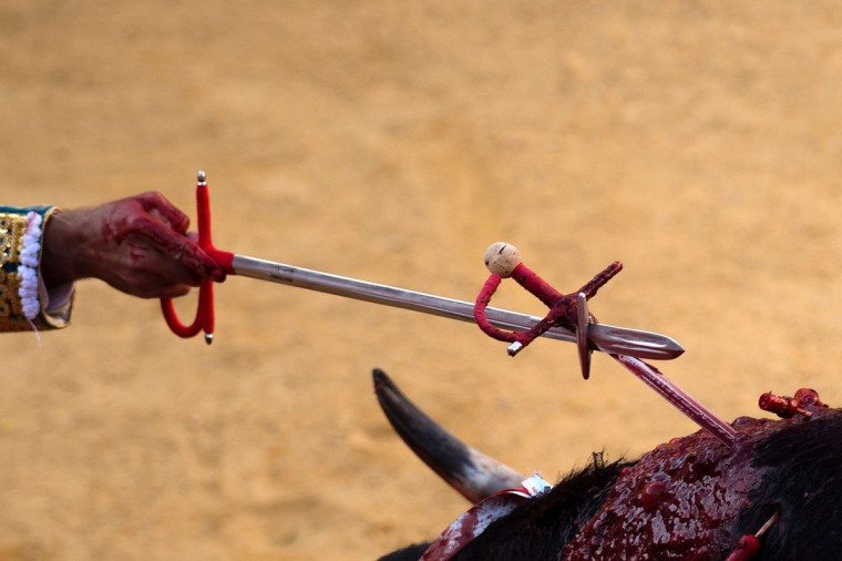 Spanish matador Cayetano Rivera removes a sword from the bull's back during the Corpus bullfighting festival at the bullring of Granada on May 25, 2016. (JORGE GUERRERO/AFP/Getty Images)