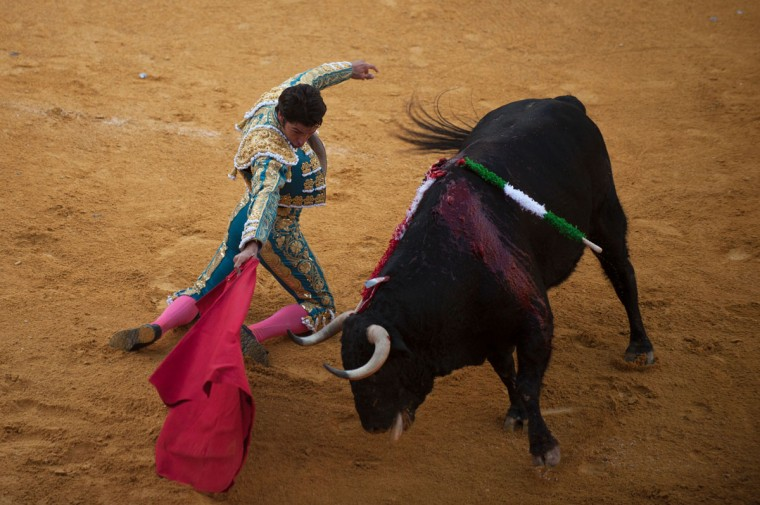 "Spanish matador Cayetano Rivera kneels to perform a pass with ""muleta"" on a bull during the Corpus bullfight festival at the bullring of Granada on May 25, 2016. (JORGE GUERRERO/AFP/Getty Images)"