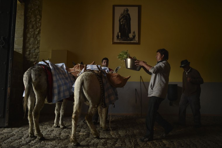 Participants of the ''Bread Procession of the Saint'', prepare a donkeys before taking part in the ceremony in honor of Domingo de La Calzada Saint (1019-1109), in Santo Domingo de La Calzada, northern Spain, Wednesday, May 11, 2016. Every year during spring season, ''Las Doncellas'' (White Virgins), hold on their head a basket covered with white cloth while they walk along this old village in honor of the saint. (AP Photo/Alvaro Barrientos)