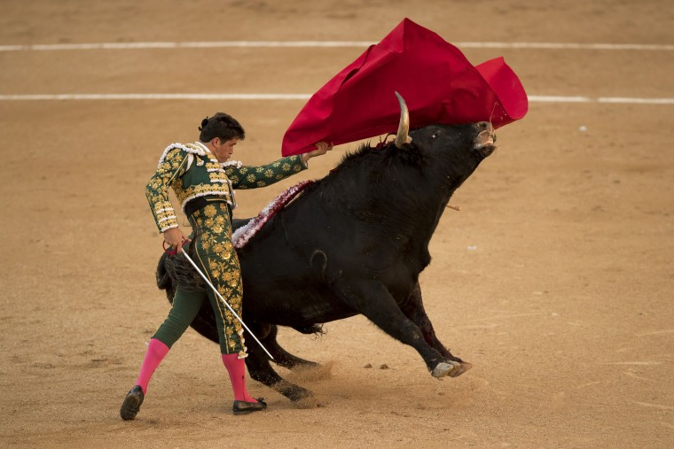 Spanish bullfighter Daniel Luque performs with a El puerto de San Lorenzo's ranch fighting bull during a bullfight of the San Isidro's bullfighting fair in Madrid, Spain, Thursday, May 19, 2016. (AP Photo/Daniel Ochoa de Olza)
