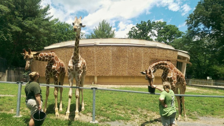 """Though O'Doherty won't name a favorite animal, he says he's drawn to giraffes for their grace and beauty. """"Giraffes are pretty phenomenal,"""" he says. """"They're gigantic, gentle vegetarians."""" (Brian O'Doherty)"""
