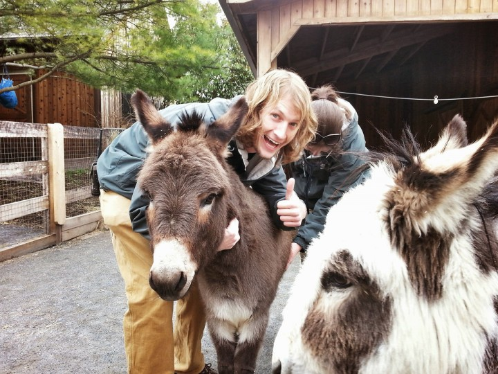 Donkeys get a medical check from some of the Zoo's staff. (Brian O'Doherty)