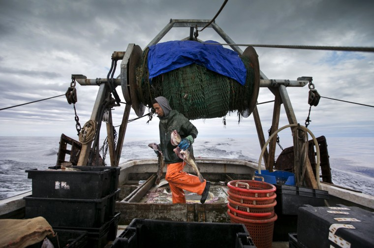 Elijah Voge-Meyers carries cod caught in the nets of a trawler off the coast of New Hampshire. Fishermen in the northeastern U.S. are struggling with warming waters that have transformed some of the country's oldest and most historic commercial fisheries. (AP Photo/Robert F. Bukaty)