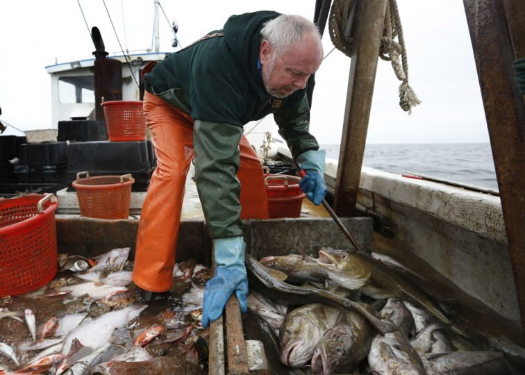 David Goethel sorts cod and haddock while fishing off the coast of New Hampshire. To Goethel, cod represents his identity, his ticket to middle class life, and his link to one the country's most historic industries, a fisherman who has caught New England's most recognized fish for more than 30 years. (AP Photo/Robert F. Bukaty)