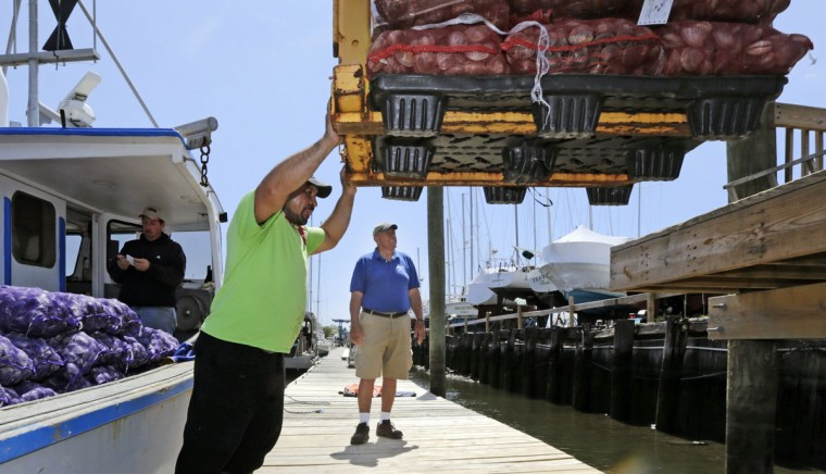 Former lobsterman Nick Crismale watches as a pallet of clams is lifted from the dock where his boat was based in Branford, Conn. Out of the business for four years, Crismale said it's a shame that lobstering, often a multigenerational enterprise in New England, is reaching its end in Connecticut. (AP Photo/Charles Krupa)