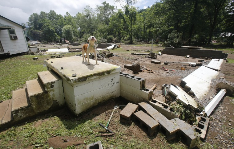 A dog guards the front steps of it's home that was swept away by floodwaters in White Sulphur Springs, W. Va., Friday, June 24, 2016. A deluge of 9 inches of rain on parts of West Virginia destroyed or damaged more than 100 homes and knocked out power to tens of thousands of homes and businesses. (AP Photo/Steve Helber)