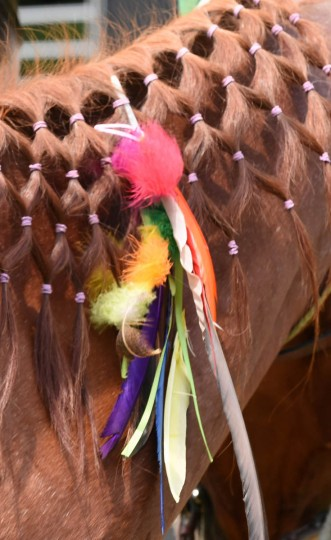 Colorful feathers adorns the mane of a horse. (Kenneth K. Lam, Baltimore Sun)