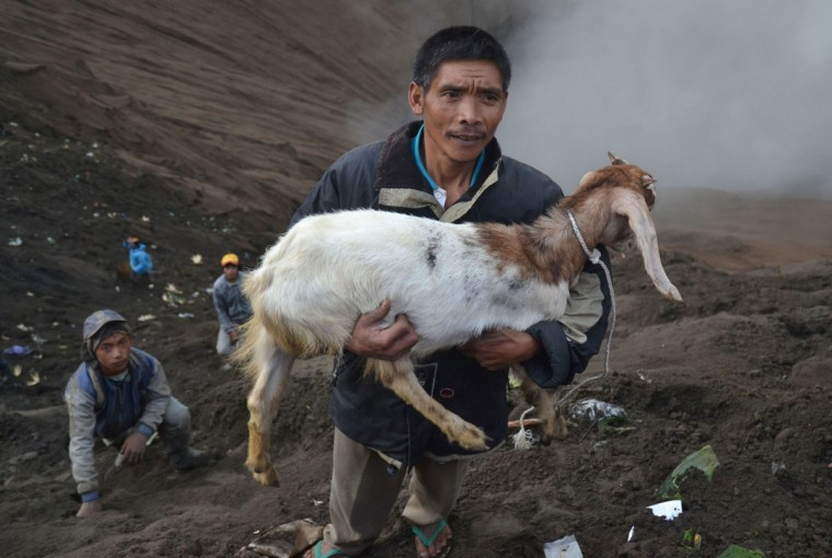 A man holds a goat released by Hindu devotees of the Tengger tribe during the Yadnya Kasada festival, on the crater of Mount Bromo in Probolinggo on July 21, 2016. During the annual Yadnya Kasada festival the Tenggerese climb Mount Bromo, an active volcano, and seek the blessing from the main deity Hyang Widi Wasa by presenting offerings of rice, fruit, livestock and other local produce. / (AFP Photo/Aman Rochman)
