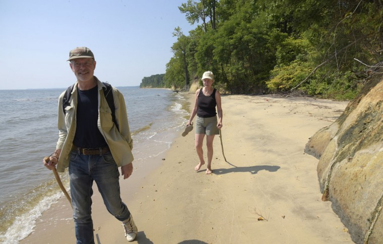 Robert Hazen, senior staff scientist with the Carnegie Institution, and writer and historian Margaret Hazen, his wife, walk along Calvert Cliffs regularly finding fossils on the beach. Calvert Cliffs border a 30 mile stretch along the Chesapeake Bay in Calvert County. One hundred feet high, the clay escarpment was formed 15 million years ago during the Miocene era (5 to 25 million years ago) and contains fossils of sea life. Bob Hazen, who is also a Robinson Professor of Earth Science at George Mason University, says they have donated thousands of shark's teeth to schools to teach children about the history of the area. In a two-hour walk on a recent July day, the Hazens collected about 20 teeth along a 2-mile stretch. (Algerina Perna/Baltimore Sun)