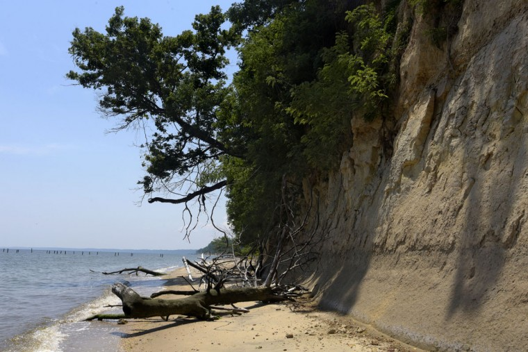 The Calvert Cliffs replete with fossils are made primarily of blue marl consisting of clay and calcium carbonate. (Algerina Perna/Baltimore Sun)