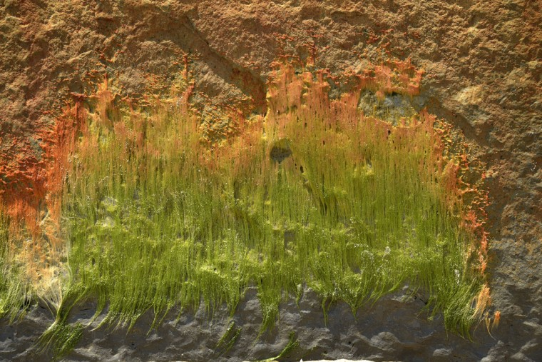 """In some areas, water laps the base of Calvert Cliffs at high tide creating a favorable environment for moss. The orange color comes from """"fluids rich in iron,"""" says scientist Robert Hazen. (Algerina Perna/Baltimore Sun)"""