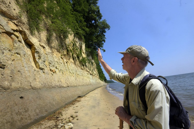 Robert Hazen, senior staff scientist with the Carnegie Institution and Robinson Professor of Earth Science at George Mason University, walks along the Calvert Cliffs. Calvert Cliffs border a 30 mile stretch along the Chesapeake Bay in Calvert County. One hundred feet high, the blue marl escarpment was formed 15 million years ago during the Miocene era (5 to 25 million years ago) and contains fossils of sea life from that epoch. Hazen and his wife, Margaret Hazen, have collected and studied the fossils for the past 25 years. (Algerina Perna/Baltimore Sun)