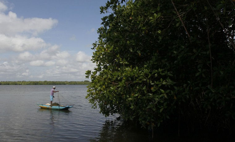 In this July 18, 2016 photo, a Sri Lankan small scale fisherman casts a net as he fishes in a lagoon surrounded by mangrove forests in Pambala, about 70 kilometers (44 miles) north of Colombo, Sri Lanka. Sri Lanka's government and environmentalists are working to protect tens of thousands of acres of mangrove forests _ the seawater-tolerant trees that help protect and build landmasses, better absorb carbon from the environment mitigating effects of global warming and reducing impact of natural disasters like tsunamis. Authorities have identified about 37,000 acres (15,000 hectares) of mangrove forests in Sri Lanka that are earmarked for preservation. (AP Photo/Eranga Jayawardena)