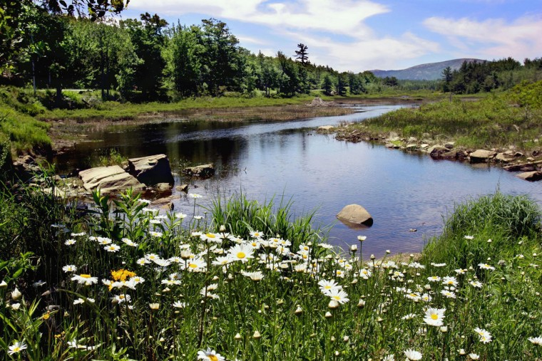 FILE - In this June 21, 2005, file photo, a stream in Acadia National Park on Mt. Desert Island, Maine, captures some of the park's beauty. The park is home to many plants and animals, and the tallest mountain on the U.S. Atlantic coast. (AP Photo/Pat Wellenbach, File)