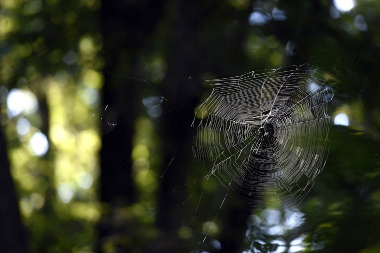 A spider web might ordinarily go unnoticed, but morning light catches the eye on Big Gunpowder Trail in the central area of the Gunpowder Falls State Park. (Kim Hairston, Baltimore Sun)