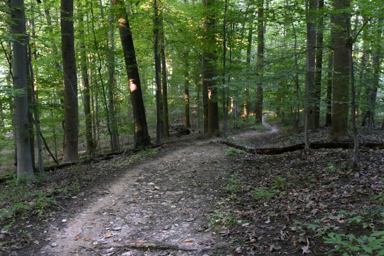 This is the Wildlands Trail in the central area of the Gunpowder Falls State Park. The route, in the Sweathouse Area, winds through hardwood forest. (Kim Hairston, Baltimore Sun)