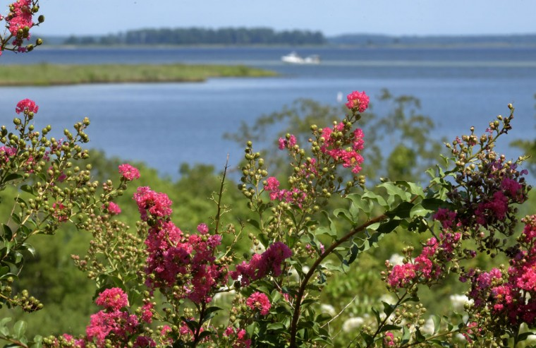 This view of Kent Island is taken from the tower of the Chesapeake Heritage & Visitor Center Piney Narrows Road. (Algerina Perna/Baltimore Sun)
