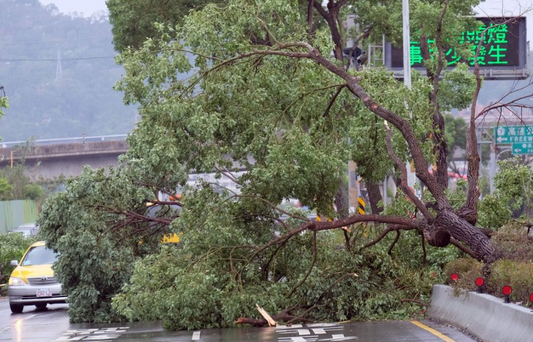 An uprooted tree blocks parts of the road during the aftermath of typhoon Megi at Xindian district in New Taipei City on September 28, 2016. Typhoon Megi hit the Chinese mainland early in the morning on September 28 killing one, after leaving a trail of destruction in Taiwan, where four are dead and a million still without power. (SAM YEH/AFP/Getty Images)