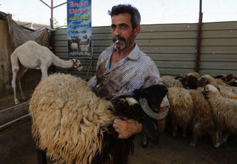 A livestock dealer displays his sheep for customers in a residential suburb of the Syrian capital Damascus on September 13, 2016, on the second day of the Eid al-Adha Muslim holiday. Muslims across the world celebrate the annual festival of Eid al-Adha, or the festival of sacrifice, which marks the end of the Hajj pilgrimage to Mecca and commemorates prophet Abraham's readiness to sacrifice his son to show obedience to God. (Louai Beshara/AFP/Getty Images)