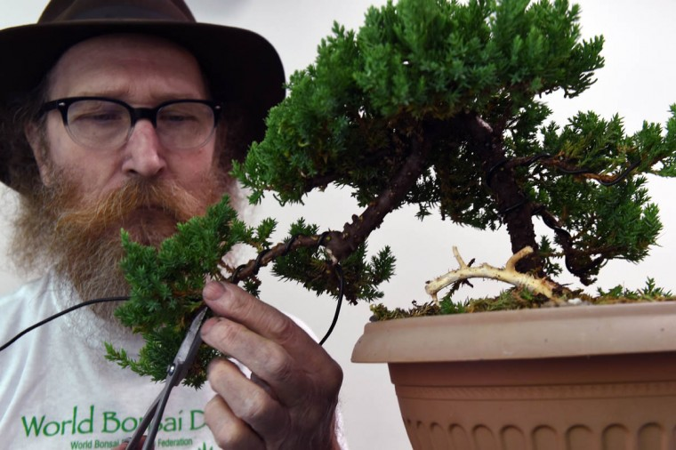 "George Wrede, of Churchville, turns a nursery juniper into a bonsai in training in about an hour during a monthly meeting of the Baltimore bonsai Club. ""The Baltimore Bonsai Club; founded in 1972; is an active and growing group of bonsai enthusiasts in Central Maryland. Club activities include exhibitions, workshops, collection trips and visiting artists,"" according to its website. (Kenneth K. Lam/Baltimore Sun)"