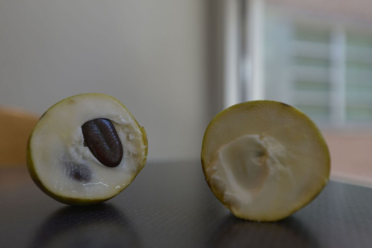 The inside of a pawpaw. (Christina Tkacik/Baltimore Sun)
