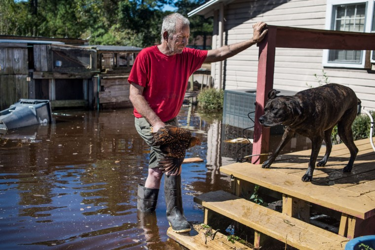FAIR BLUFF, NC - OCTOBER 11: George Aubert rescues one of his chickens from rising floodwaters caused by remnants of Hurricane Matthew on October 11, 2016 in Fair Bluff, North Carolina. Thousands of homes have been damaged in North Carolina as a result of the storm and many are still under threat of flooding. (Photo by Sean Rayford/Getty Images)