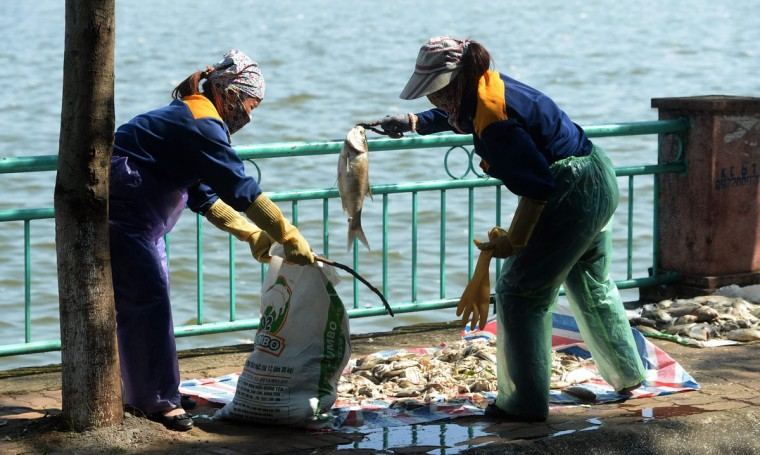 Environment workers collect dead fish after they were fished up from Ho Tay lake (West Lake), Hanoi's largest lake, on October 3, 2016. (HOANG DINH NAM/AFP/Getty Images)