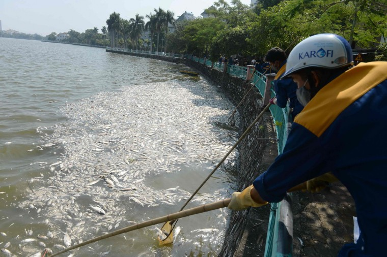 Environment workers use a nets to collect dead fish from Ho Tay lake (West Lake), Hanoi's largest lake, on October 3, 2016. (HOANG DINH NAM/AFP/Getty Images)