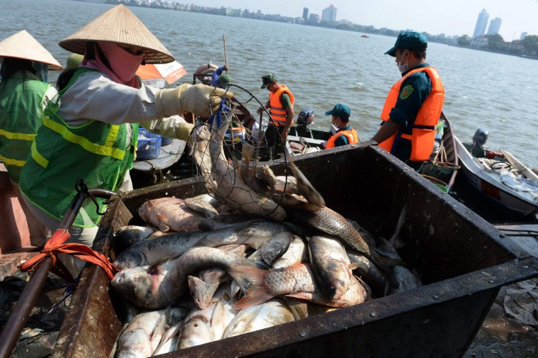 An environment worker pours down dead fish into a trash cart next to Ho Tay lake (West Lake), Hanoi's largest lake, on October 3, 2016. (HOANG DINH NAM/AFP/Getty Images)
