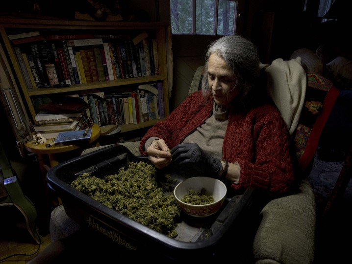 "In this Thursday, Oct. 13, 2016 photo, Nikki Lastreto trims ""little buds"" from last season's harvest at her home near Laytonville, Calif. Lastreto and her husband, Swami Chaitanya, who grow their ""Swami's Select"" medical marijuana, support the passage of Proposition 64, the Nov. 8 ballot initiative, which would legalize the recreational use of marijuana. (AP Photo/Rich Pedroncelli)"