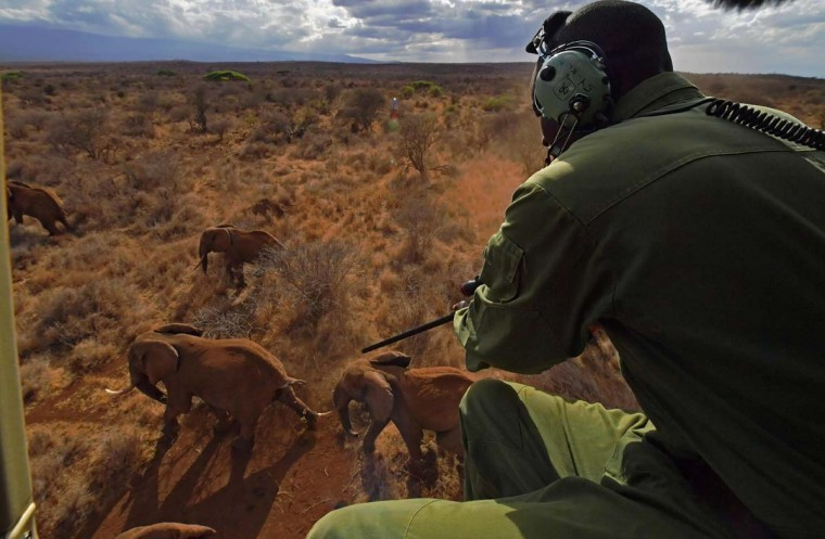 A vet shoots an elephant with a tranquilizer gun from a helicopter outside Amboseli National Park on November 2, 2016. The International Fund for Animal Welfare (IFAW) is collaring two young male elephants from the Amboseli region to better understand their migration routes. As Kenya's population increases dramatically every year more land traditionally used by elephants as routes is being populated and developed and elephants have been impacted. IFAW intends to study data from the collared elephants movements to plot how this impact affects them. (CARL DE SOUZA/AFP/Getty Images)