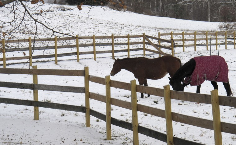 Horses stand in new fallen snow in a field, in Barre, Vt., Monday, Nov. 21, 2016. The National Weather Service says the storm that started over the weekend has dropped up to 18 inches of snow near Binghamton and Syracuse, New York, but most parts of Vermont got less than a foot. (AP Photo/Wilson Ring)