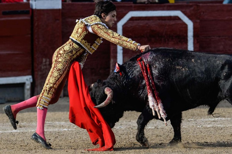 "Peru's bullfighter Andres Roca Rey, performs during the ""Senor de los Milagros"" festival at the Acho bullring in Lima on December 4, 2016. (AFP/Getty Images)"