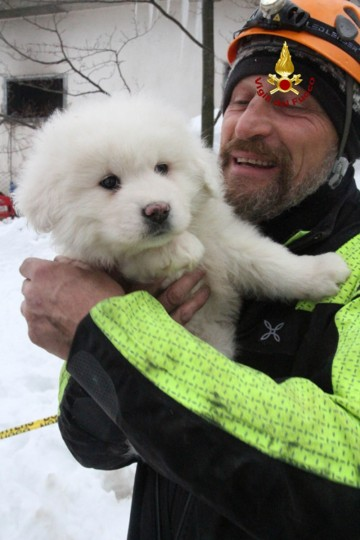 "A handout picture released on January 23, 2017 by the Italian Firemen ""Vigili del Fuoco"" shows a fireman carrying a puppy found at the avalanche-hit Hotel Rigopiano, near the village of Farindola, on the eastern lower slopes of the Gran Sasso mountain. Fireman Fabio Jerman said three puppies had been found alive today in one of the air pockets under the rubble, which he said was ""an important sign of life which gives us hope"". Italian rescuers pulled nine survivors from the hotel hit by an avalanche on January 18, 2016 and continue to search the 23 people still trapped under the ruins. A sixth victim was pulled out of the rubble and snow yesterday. (AFP PHOTO / AFP PHOTO AND Vigili del Fuoco)"