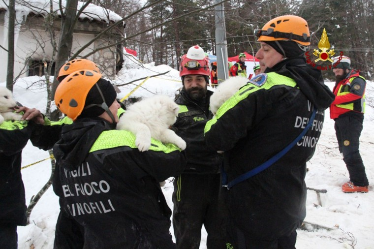"A handout picture released on January 23, 2017 by the Italian Firemen ""Vigili del Fuoco"" shows firemen carrying puppies found at the avalanche-hit Hotel Rigopiano, near the village of Farindola, on the eastern lower slopes of the Gran Sasso mountain. Fireman Fabio Jerman said three puppies had been found alive today in one of the air pockets under the rubble, which he said was ""an important sign of life which gives us hope"". Italian rescuers pulled nine survivors from the hotel hit by an avalanche on January 18, 2016 and continue to search the 23 people still trapped under the ruins. A sixth victim was pulled out of the rubble and snow yesterday. (AFP PHOTO / AFP PHOTO)"