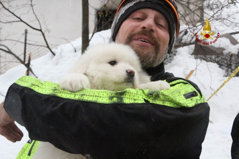 "A handout picture released on January 23, 2017 by the Italian Firemen ""Vigili del Fuoco"" shows a fireman carrying a puppy found at the avalanche-hit Hotel Rigopiano, near the village of Farindola, on the eastern lower slopes of the Gran Sasso mountain. Fireman Fabio Jerman said three puppies had been found alive today in one of the air pockets under the rubble, which he said was ""an important sign of life which gives us hope"". Italian rescuers pulled nine survivors from the hotel hit by an avalanche on January 18, 2016 and continue to search the 23 people still trapped under the ruins. A sixth victim was pulled out of the rubble and snow yesterday. / (AFP PHOTO / AFP PHOTO AND Vigili del Fuoco)"