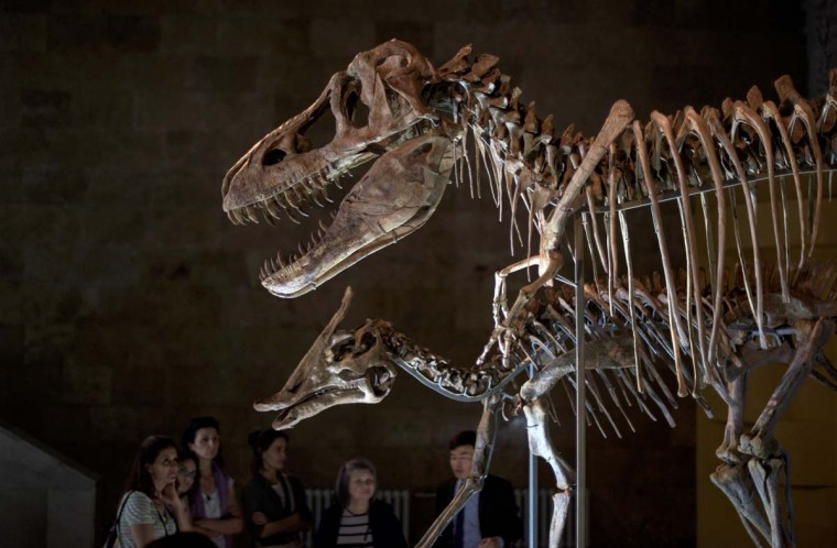 This picture taken on July 2, 2016 shows tourists look at the Tyrannosaurus Bataar skeleton in a museum in Ulan Bator. For years, herder Gelegrash had a sideline bringing tourists to see a dinosaur skull hidden near the Flaming Cliffs in Mongolia's Gobi desert. Then, one day, it was gone. It is one of thousands of ancient fossils that have disappeared from the country since American explorer Roy Chapman Andrews -- supposedly the inspiration for the movie character Indiana Jones -- discovered dinosaur eggs there nearly a century ago. (JOHANNES EISELE/AFP/Getty Images)