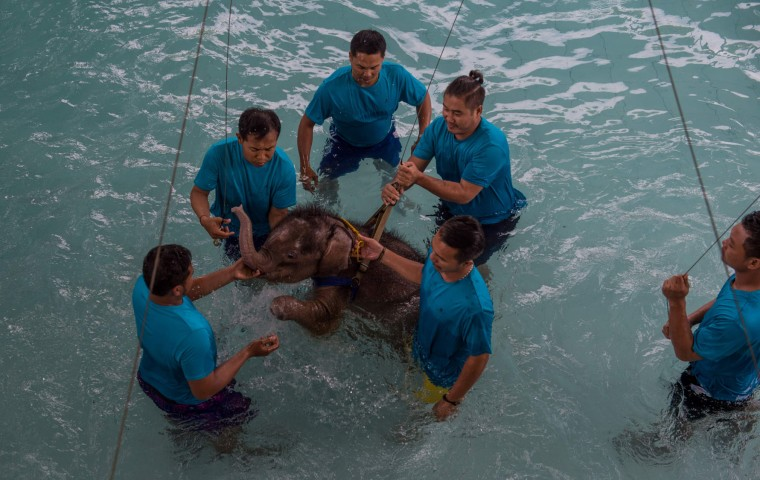 Six month-old baby elephant 'Clear Sky' receives assistance from her guardians during a hydrotherapy session at a local clinic in Chonburi province on January 5, 2017. After losing part of her left foot in a snare in Thailand, baby elephant 'Clear Sky' is now learning to walk again -- in water. The six-month-old is the first elephant to receive hydrotherapy at an animal hospital in Chonburi province, a few hours from Bangkok. The goal is to strengthen the withered muscles in her front leg, which was wounded three months ago in an animal trap laid by villagers to protect their crops. (Roberto Schmidt/AFP/Getty Images)