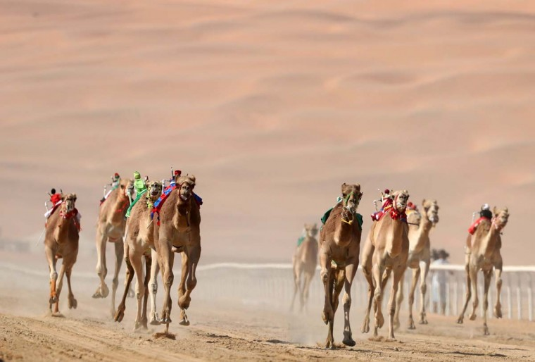 Camels race during the Liwa 2017 Moreeb Dune Festival on January 3, 2017, in the Liwa desert, some 250 kilometers west of the Gulf emirate of Abu Dhabi. The festival, which attracts participants from around the Gulf region, includes a variety of races (cars, bikes, falcons, camels and horses) or other activities aimed at promoting the country's folklore. (KARIM SAHIB/AFP/Getty Images)