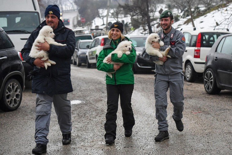 Police officers hold three puppies that were found alive in the rubble of the avalanche-hit Hotel Rigopiano, near Farindola, central Italy, Monday, Jan. 22, 2017. Emergency crews digging into an avalanche-slammed hotel were cheered Monday by the discovery of three puppies who had survived for days under tons of snow, giving them new hope for the 23 people still missing in the disaster. (Alessandro Di Meo/ANSA via AP)