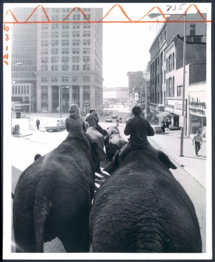 Elephants with the Ringling Brothers Circus parade through Baltimore in 1972. (Baltimore Sun)