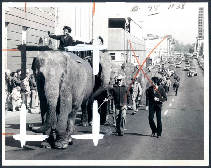 Elephants with the Ringling Brothers Circus parade through Baltimore in 1979. (Baltimore Sun)